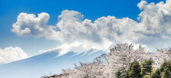 Mount Fuji and pink cherry blossoms in spring season, Japan Royalty Free Stock Photography