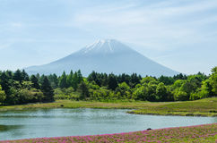 Mount fuji and pink moss at japan ,selective focus blur foreground Royalty Free Stock Photo