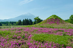 Mount fuji and pink moss at japan ,selective focus blur foreground Royalty Free Stock Image