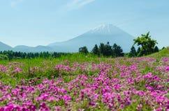 Mount fuji and pink moss at japan ,selective focus blur foreground Stock Photography