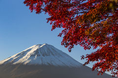 Mount Fuji with red autumn leaf. Japan Stock Images