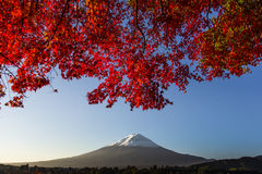 Mount Fuji with red autumn leaf. Japan Royalty Free Stock Photos