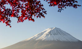 Mount Fuji with red autumn leaf. Japan Royalty Free Stock Images