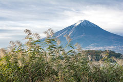 Mount Fuji and reed Stock Photography