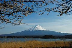 Mount Fuji. Scenic view of Mount Fuji with Lake Yamanaka in foreground, Honshu Island, Japan Stock Photography