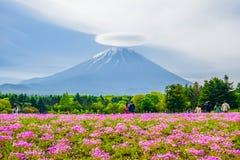 Mount Fuji sikt bak färgrikt blommafält på Fuji Shibazakura Fastival, Japan Royaltyfri Foto