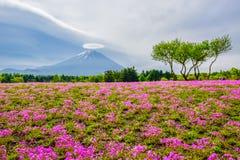 Mount Fuji sikt bak färgrikt blommafält på Fuji Shibazakura Fastival, Japan Arkivbilder