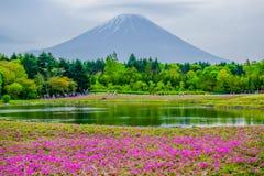 Mount Fuji sikt bak färgrikt blommafält på Fuji Shibazakura Fastival, Japan Fotografering för Bildbyråer