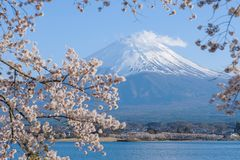 Mount Fuji with snow capped, blue sky and beautiful Cherry Blossom or pink Sakura flower tree in Spring Season at Lake kawaguchiko. Yamanashi, Japan. landmark royalty free stock images