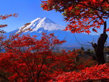 Mount Fuji. Taken in the Autumn at Fuji-Q, near the Chureito Pagoda Royalty Free Stock Photography