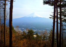 Mount Fuji Through Trees Royalty Free Stock Images