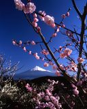 Mount Fuji VI stock images
