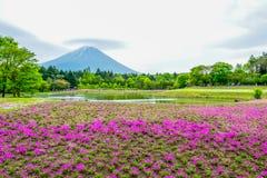 Mount Fuji view behind colorful flower field at Fuji Shibazakura Fastival, Japan Stock Photo