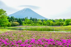 Mount Fuji view behind colorful flower field at Fuji Shibazakura Fastival, Japan Royalty Free Stock Photography