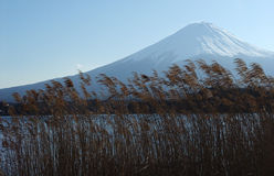 Mount Fuji. View of the snowcapped Mt Fuji from Lake Kawaguchi with long grasses in the foreground stock image