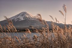 Japanese landscape at sunset. Mount Fuji viewed from Kawaguchi lake at sunset, Japan royalty free stock photos