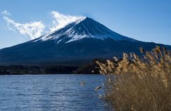 Zoom-in Mount Fujit with foreground of lake and long grass Royalty Free Stock Photos