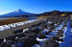 Mount Fuji of winter scene from Lake Kawaguchi Japan royalty free stock photography