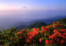 Mount Fuji XII Royalty Free Stock Images