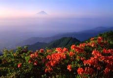 Mount Fuji XII. Orange Azaleas with beautiful Mt. Fuji in the background Royalty Free Stock Images