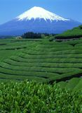 Mount Fuji XLIX Royalty Free Stock Image