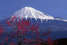 Mount Fuji XV. Mount Fuji with red plum blossoms Royalty Free Stock Images