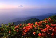 Mount Fuji XVI. Beautiful Azalias in bloom with Mt. Fuji in the distance Royalty Free Stock Photos