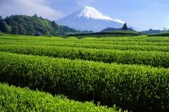 Mount Fuji XVIII. Fresh green tea fields with snow-capped Mount Fuji Stock Photo