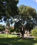 Mount Gambier City Centre. Stunning greenery and clear blue skies at Mount Gambier, South Australia Stock Images