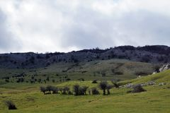 Mount Gorbea. Trees in the field of Arraba, Mount Gorbea, Alava, Basque Country, Spain royalty free stock photography
