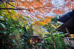 Mount Hiei Royalty Free Stock Photography
