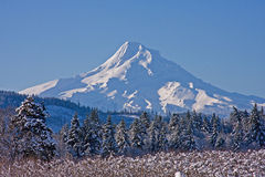 Mount Hood Stock Images