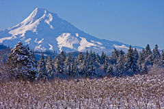 Mount Hood Royalty Free Stock Photography