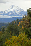 Mount Hood. Towering over the Timber Line royalty free stock photography