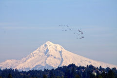 Mount Hood with geese flying Royalty Free Stock Photo