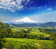 Mount hood and hood river valley. In a bright day royalty free stock image