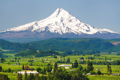 Mount hood and hood river valley. Beautiful Mount hood and hood river valley royalty free stock photo