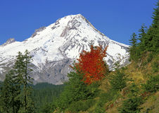 Mount Hood, Oregon Royalty Free Stock Images