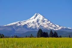 Mount Hood Oregon USA Royalty Free Stock Photos
