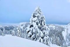 Mount Hood ski resort after snowfall. Chirstmas tree covered with snow. Mount Hood ski resort near Portland. Oregon. United States stock images