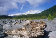 Mount Hood and tree stump. An old tree stump frames the foreground with majestic Mount Hood in the background stock images
