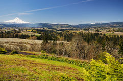 Mount hood and valley from panaroma pointma Royalty Free Stock Image