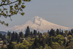 Mount Hood. View of mount hood from the outskirts of Portland Oregon Royalty Free Stock Images