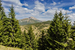 Mount Hoverla Royalty Free Stock Images