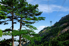 Huangshan Pines in Mountains of China Stock Photo