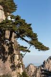 Mount Huangshan Pine Royalty Free Stock Photo