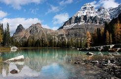 Mount Huber and Opabin Plateau, Yoho National Park, Canada Royalty Free Stock Images