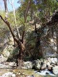 Mount Ida Royalty Free Stock Photos