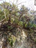 Mount Ida Stock Image