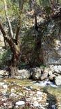 Mount Ida Royalty Free Stock Image